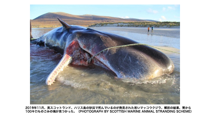 100 kg-of-plastic-waste-in-the-stomach-of-a-whale-why?